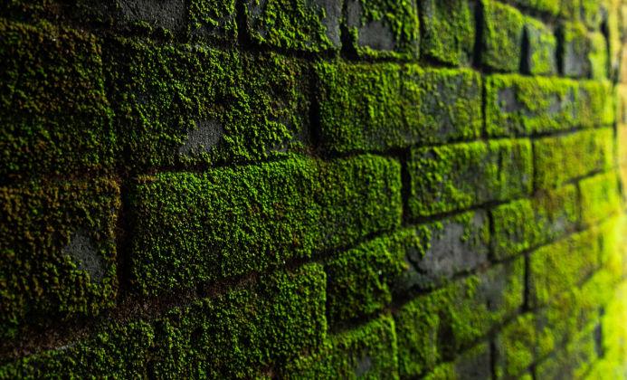 Wand mit Moos bedeckt