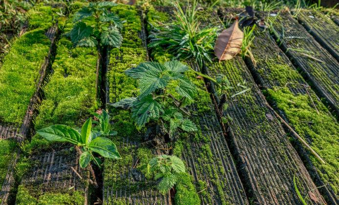 Holzboden mit Moos bedeckt