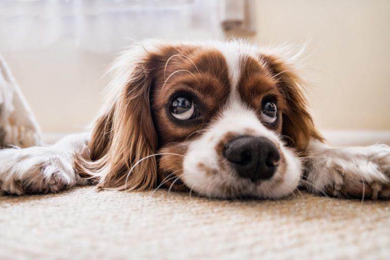Hundegeruch entfernen