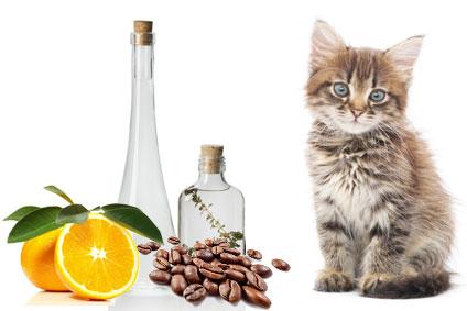 Katzenurin geruch entfernen tipps hier - Essig kochen gegen geruch ...