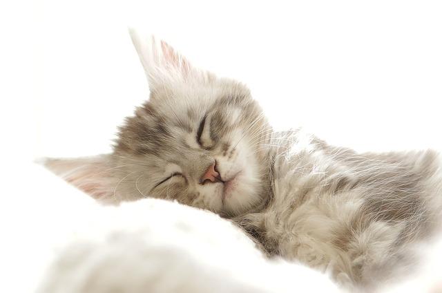 Katzenurin Geruch Entfernen Tipps Hier Profichemiecom